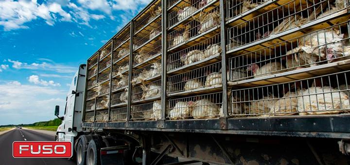 Consejos para el transporte de ganado seguro con un camión de carga